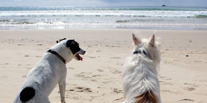 vacanza-cani-gatti-trovaprezzi