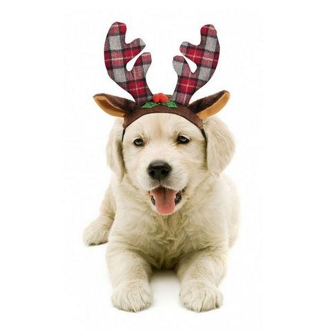 cappellino renna per cani trovaprezzi