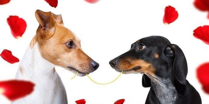 regali-di-coppia-san-valentino