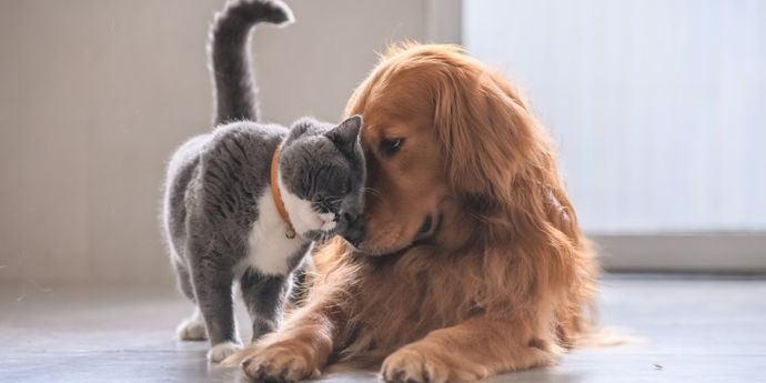 guida speciale animali