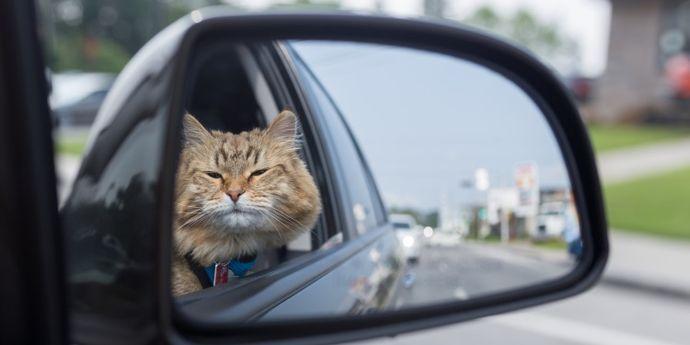 in vacanza con il gatto