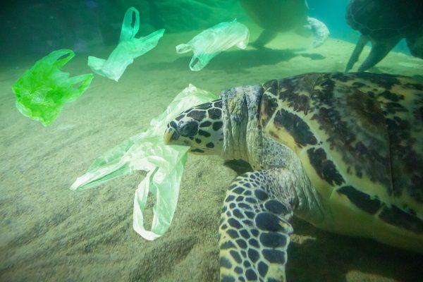 senza sacchetti di plastica per tutela dell'ambiente