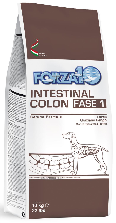 Forza10 Intestinal Colon Fase 1